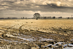 Сиротливое дерево дуба Стоковое Изображение RF
