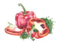 Красный болгарский перец с душицей на задней части белизны Стоковая Фотография RF