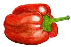 Красный болгарский перец Стоковая Фотография