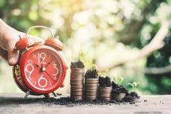 Красный будильник и монетки растя вверх на таблице Стоковая Фотография RF