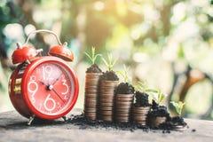 Красный будильник и монетки растя вверх на таблице Стоковая Фотография