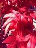 красный вал Стоковые Изображения