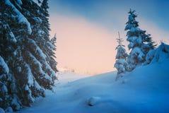 Красный восход солнца зимы Стоковые Фотографии RF