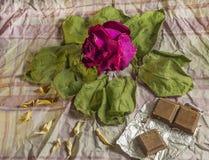 Красный высушите розовую на старых листьях стоковые фотографии rf
