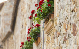 Красный гераниум в цветени на баках окон Стоковое Изображение