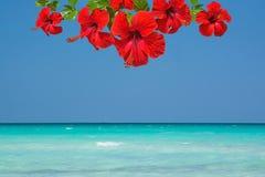Красный гибискус цветет океан предпосылки тропический Стоковое Изображение RF