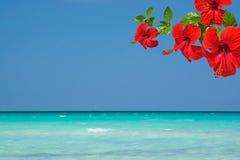 Красный гибискус цветет океан предпосылки тропический Стоковое Изображение