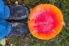 Красный гриб на траве в лесе Стоковое Фото