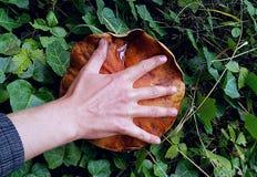Красный гриб Стоковые Изображения RF