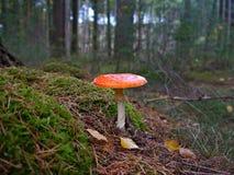 Красный гриб Стоковая Фотография