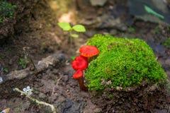 Красный гриб стоковое изображение