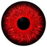 Красный глаз Стоковая Фотография RF