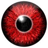 Красный глаз Стоковое Изображение RF