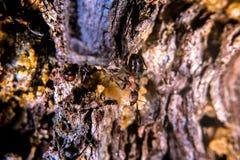 Красный деревянный муравей Стоковая Фотография RF