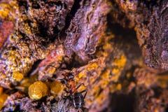 Красный деревянный муравей Стоковое Фото
