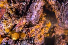 Красный деревянный муравей Стоковые Фотографии RF