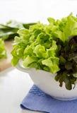 Красный дуб и зеленый салат дуба стоковая фотография rf