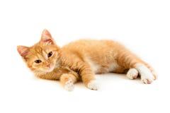 Красный лежа котенок Стоковые Изображения