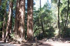 Красный деревянный лес, Калифорния Стоковая Фотография RF