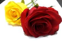 красный желтый цвет роз иллюстрация штока