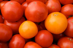 красный желтый цвет томатов Стоковые Изображения RF