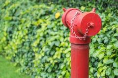 Красный жидкостный огнетушитель окруженный зеленой травой Стоковое Фото