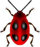Красный жук Иллюстрация вектора
