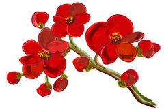 Красный завтрак-обед орхидеи бесплатная иллюстрация
