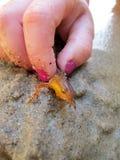 Красный запятнанный Salamander 2 Стоковая Фотография RF