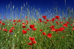 красный засоритель Стоковое Изображение