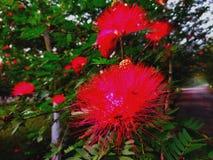 Красные цветки стоковое фото rf