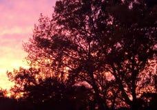 красный заход солнца Черные деревья против пылая неба стоковое фото rf
