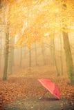 Красный зонтик в парке осени на ковре листьев Стоковая Фотография