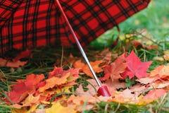 Красный зонтик с кленовыми листами дождя Стоковая Фотография RF