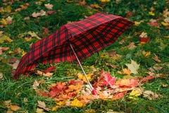 Красный зонтик с кленовыми листами дождя Стоковое Фото