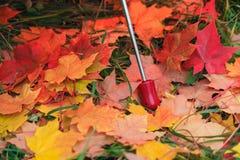 Красный зонтик с кленовыми листами дождя Стоковые Фотографии RF