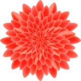 Красный изолированный пион Стоковая Фотография RF