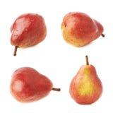 Красный изолированный плодоовощ груши Стоковые Изображения RF