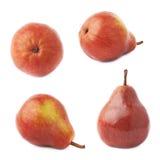 Красный изолированный плодоовощ груши Стоковые Фото