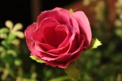 Красный искусственный цветок который украшает дом Стоковые Фотографии RF
