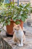 Красный и белый кот против в горшке завода сидя на каменной стене стоковое изображение