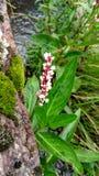 Красный и белый цветок стоковое фото