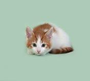 Красный и белый котенок лежит на зеленом цвете стоковое изображение rf