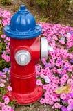 Красный и голубой жидкостный огнетушитель Стоковые Фотографии RF