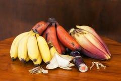 Красный и желтый банан с цветком банана и ручкой сахара камышовой Стоковые Фотографии RF