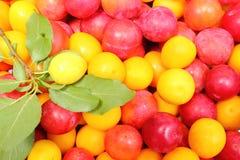 Красный и желтый Мирабель и зеленые лист Стоковые Фотографии RF