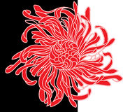 Красный и черный цветок Стоковое Изображение RF