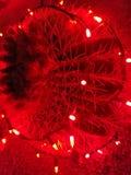 Красный кактус освещает большой сад Стоковые Изображения