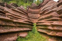 Красный каменный лес Стоковое Фото
