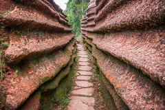 Красный каменный лес Стоковая Фотография RF